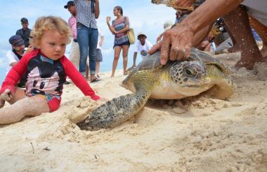 Niño juega con una tortuga en Playa Blanca.