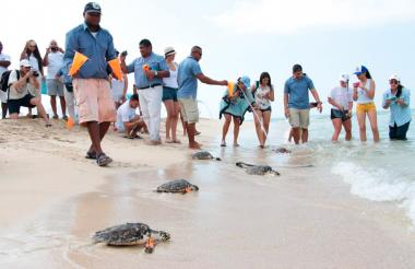 El desove de las tortugas se estaría viendo afectado por una decisión de los estrados judiciales.