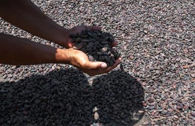 Las exportaciones de cacao del año pasado al resto de Centroamérica, Estados Unidos y Europa llegaron a 1.400 toneladas métricas.