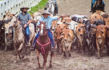El ministro de Agricultura, Juan Guillermo Zuluaga, y Camilo Donoso, director de Proagroambiente, en una de las entregas ganaderas.