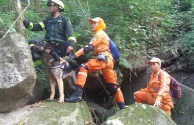 La Defensa Civil con los perros buscan al niño.