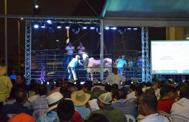 Subasta de ganado en Agroexpo Caribe 2018.
