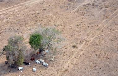 La sequía producto del fenómeno de 'El Niño' de 2015 y 2016, azotó fuertemente el sur del Atlántico, sus cultivos, la ganadería y los espejos de agua.