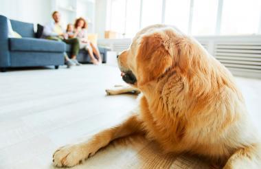 La salud de la piel de los perros es un factor clave en el ambiente y aroma de la casa.