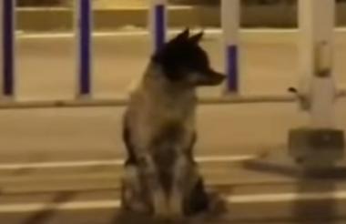 El animal permanece las 24 horas en la misma carretera en la que falleció su dueña.