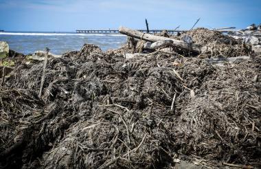 Tarullas amontonadas en la orilla de la playa.