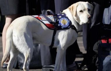 Sully, el fiel perro del exmandatario estadounidense.
