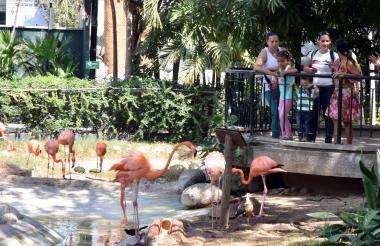 Varias familias aprecian el hábitat de los  flamencos.