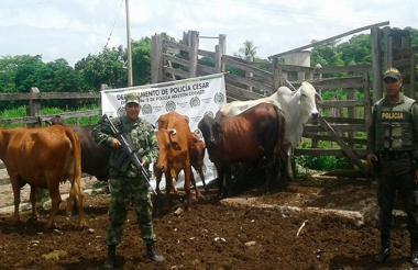 Semovientes recuperadas por el Ejército Nacional.