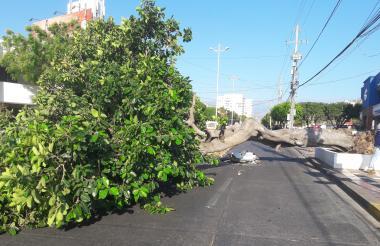 Árbol caído sobre la carrera novena con calle 7C, en el norte de Valledupar, el pasado sábado.