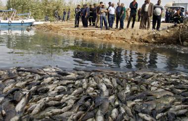 A finales de 2018, piscicultores iraquíes en el sur de Bagdad encontraron multitud de carpas muertas en las orillas del río Éufrates o flotando en sus cuencas