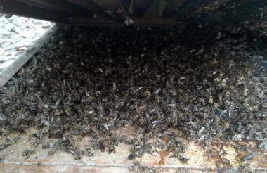 Abejas envenenadas en un apiaro en Ciénaga de Oro.