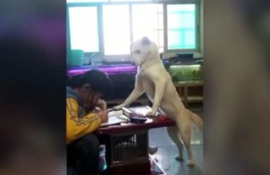 El video fue grabado en Guiyang, provincia de Guizhou (China).