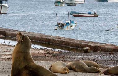 """""""Es una prioridad nacional la conservación de las Islas Galápagos, al ser consideradas un laboratorio viviente con especies únicas en el planeta"""", agregó la cancillería."""