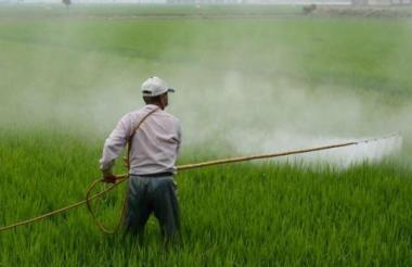 El glifosato fue desarrollado por la empresa estadounidense Monsanto, adquirida en 2018 por el grupo alemán Bayer.
