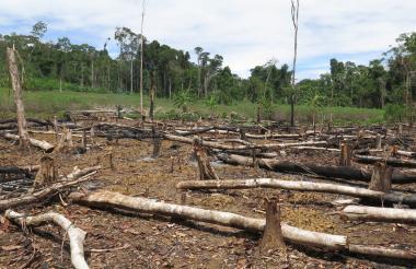 Deforestación en la selva del Amazonas que comparten  Perú, Brasil, Colombia y Ecuador.