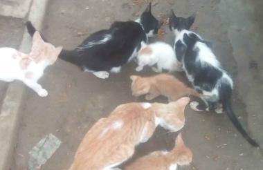 Al menos diez gatos se encuentran en el cambuche del parque Metropolitano.