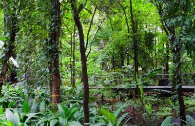 Vista de bosque en Antioquia.