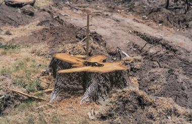 Recientemente en Barranquilla protestaron por tala de árboles que obedecía a la construcción de un proyecto vial.