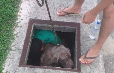 Tara cayó en este hueco en Miramar el domingo.