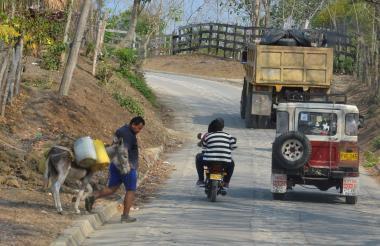 En el área rural de Sincelejo los burros son usados para transportar agua en pimpinas.