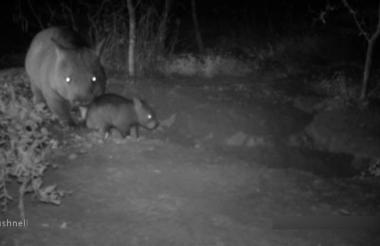 Imagen tomada de video.