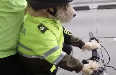 El perrito cuenta con un equilibrio asombroso.