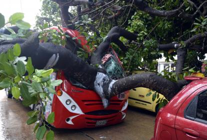 Gran parte del tronco del árbol cayó sobre un bus. Otros carros no tienen mayores daños.