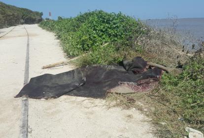 En estas alfombras fueron hallados los cadáveres de los dos individuos.