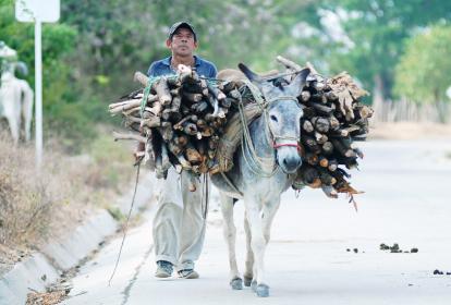 Un campesino transporta leña en su burro por una de las vías de acceso a lo Montes de María.