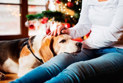 Las mascotas tienden a mostrarse asustadas durante la celebración navideña.