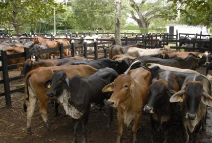 El objetivo es brindar un escenario propicio para que los ganaderos comercialicen sus animales.