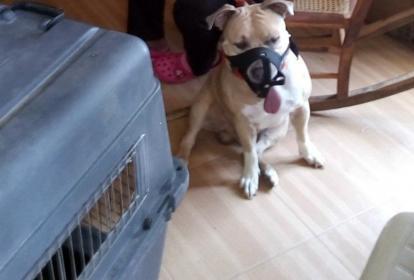 El canino fue trasladado a un albergue temporal.