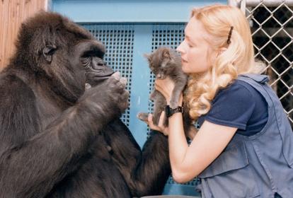 Koko tenía una estrecha relación con Francine Patterson y el gato All Ball.