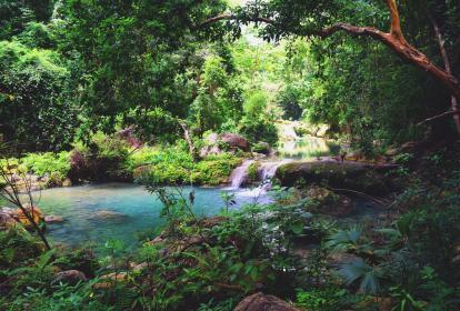 Este rincón de la península de La Guajira fue declarado Reserva forestal en el año 2007, con el fin de preservar la diversidad en fauna y flora que reside en el lugar.