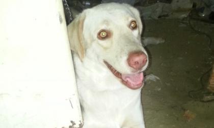 Cuando ladrón la iba a vender, recuperan perra robada