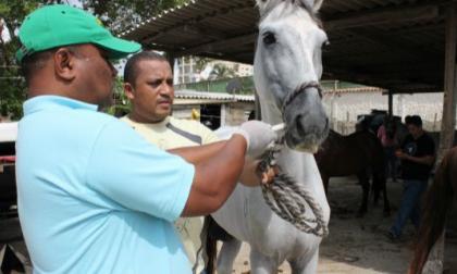 ...Y ahora, microchips inyectables para caballos cocheros