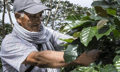 Juan Valdez venderá en Estados Unidos edición especial de café cultivado en Ciénaga