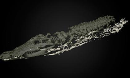 La tomografía muestra a la perfección lo que se esconde en el interior del animal, de 3 metros de largo.
