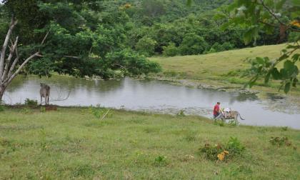 Un campesino se abastece de agua en un jagüey, en una zona veredal sucreña.