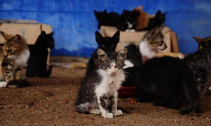 Hoy será radicada la política pública de bienestar animal