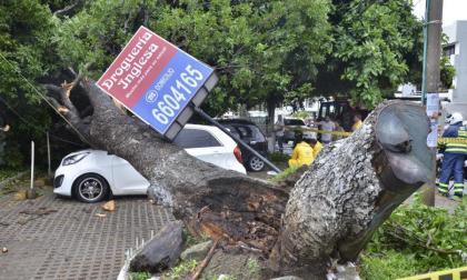 Una bonga se desplomó en el barrio Manga y causó varios daños