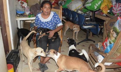 Siete perros rodean a Diosmari Palacio en la sala de su casa, mientras está sentada en una mecedora.
