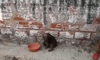 Repudio en redes sociales por caso de perro que fue quemado en Barranquilla