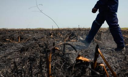 Campesinos estarían implicados en quema de 100 hectáreas