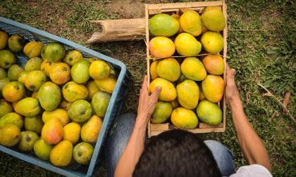 Microcrédito en Región Caribe es el 13,8% del país