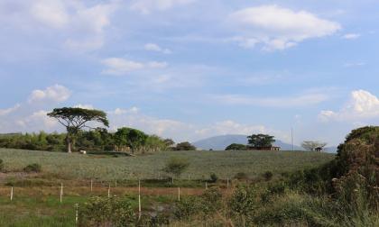 Programa de Restitución de Tierras ha logrado devolver 300.000 hectáreas