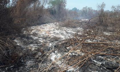 Incendio destruye 8 ha de bosque cerca al Lago El Cisne