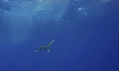Un muerto en Australia tras ataque de un tiburón