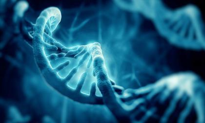 A través de bases de datos de perfiles se puede encontrar un ancestro común y empezar la búsqueda.
